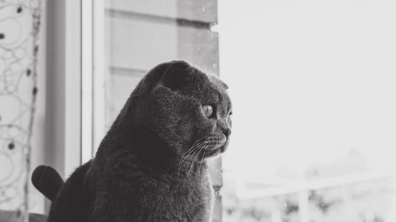うつむく灰色の猫