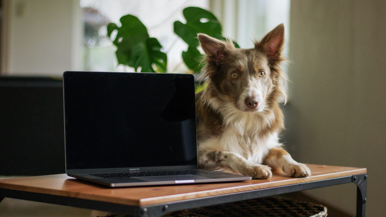 パソコンの隣に座る犬