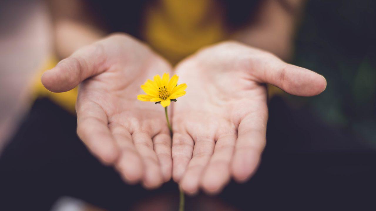 黄色の花を差し出す両手